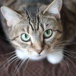 Picture of cat whiskers for Morris Animal Inn.