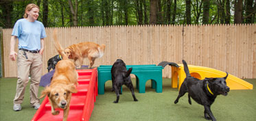 Group of dogs playing outside on playground equipment