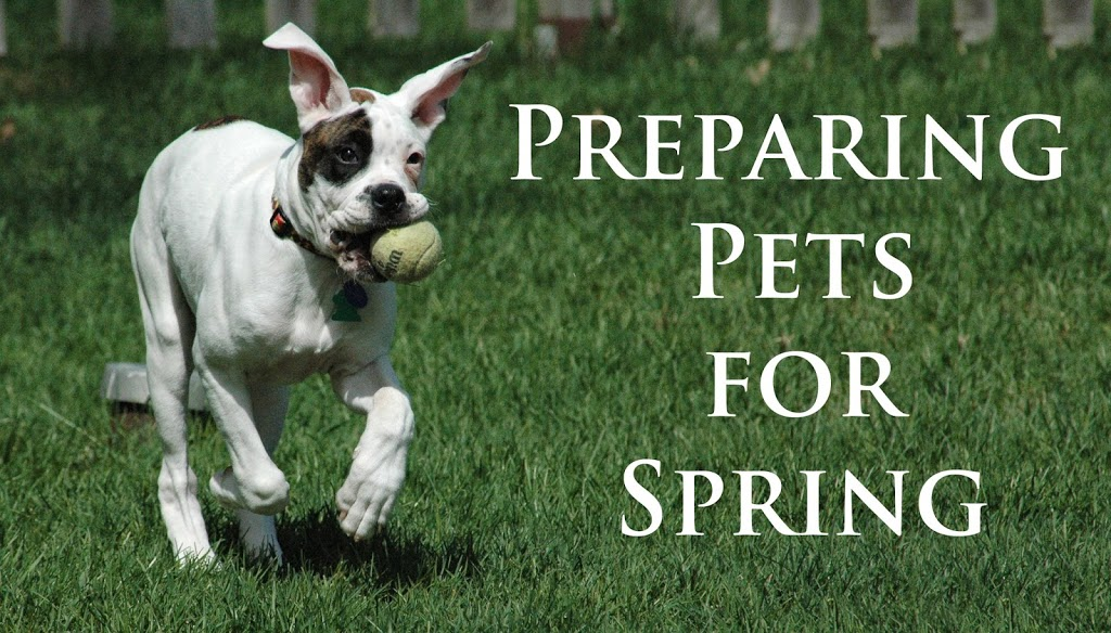 preparing pets for spring morris animal inn