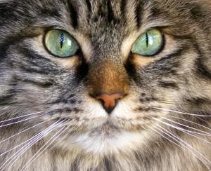 cat's eyes change color