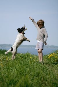 dog and child exercising