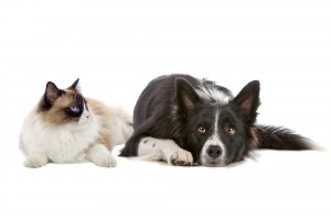 cat and dog for adoption