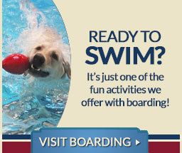 Visit our dog pool!